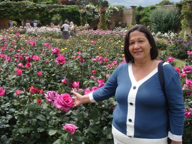 Garden of red roses