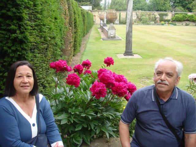 garden, roses ande grass